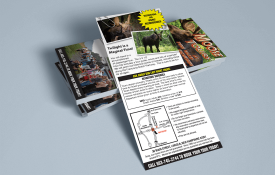 Moose Tours Rack Card Print Design